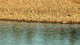 river prut 13 Footage