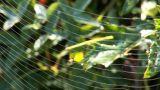 web 9 Footage