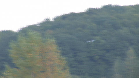 stork 4 Stock Video Footage