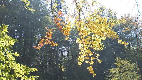 autumn 3 Footage