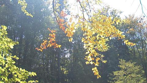 autumn 3 Stock Video Footage