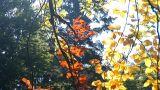 autumn 5 Footage