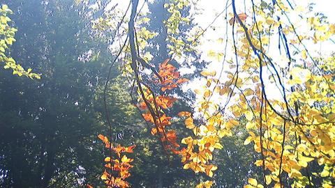 autumn 5 Stock Video Footage
