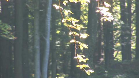 autumn 7 Stock Video Footage