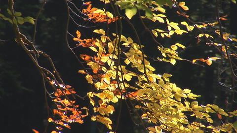 autumn 7 Footage