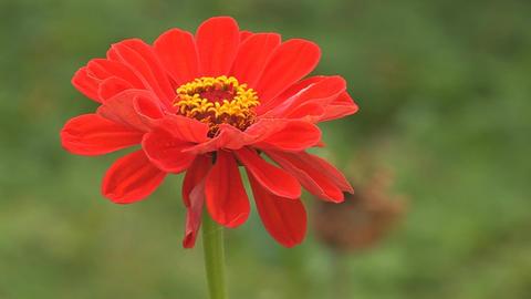flower 8 Stock Video Footage