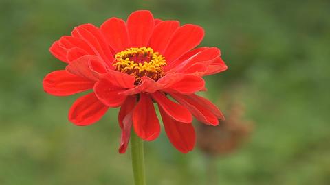 flower 8 Footage