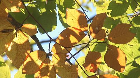 autumn 2 Stock Video Footage