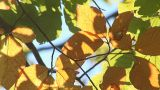 autumn 2 Footage