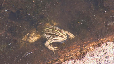 frog 3 Stock Video Footage