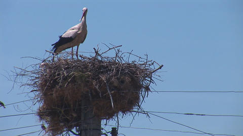 stork 1 Stock Video Footage