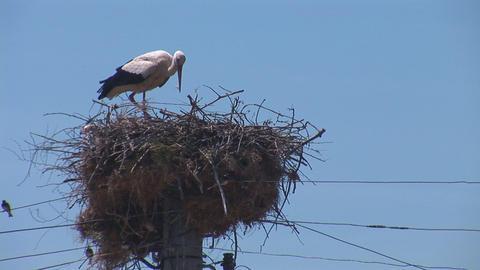 stork 1 Footage