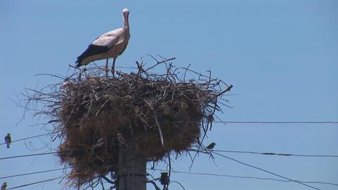 stork 3 Footage