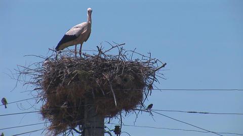 stork 3 Stock Video Footage