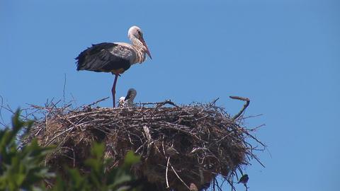 stork 5 Footage