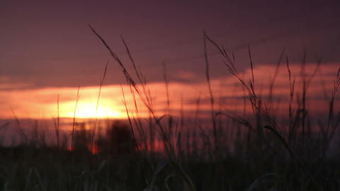 grass at sunset Stock Video Footage