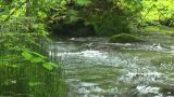 Mountain stream Footage