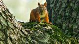 Squirrel watching Footage