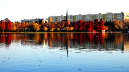 Autumn afternoon in a park with the tower of the orthodox church, gulls, sound Footage
