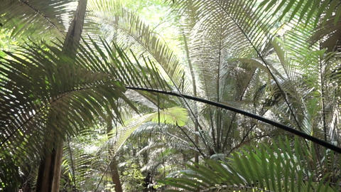 Tropical jungle forest next to the cliff, ancient forest before time, dinosaur p Footage
