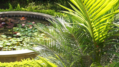 Lush Tropical Garden With Lotus Pond stock footage