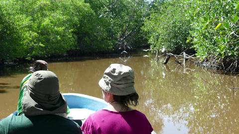 Cruising the mangroves of Juan Venado Island Nature Reserve Footage