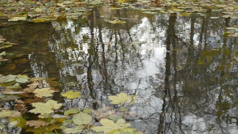 Windy Autumn Pond Surface Footage