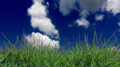 Grass On The Wind With Clouds stock footage