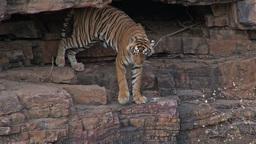 Tigers- 3 2