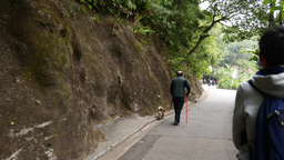 Old man with dog and boy walking on the pathway in rocky... Stock Video Footage