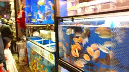 Colorful fish in showcase aquarium - live fish shop Footage