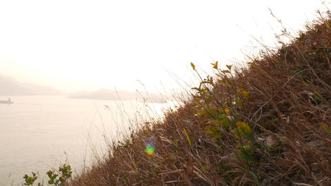 Overbright sea horizon line and dry grass hillside on... Stock Video Footage