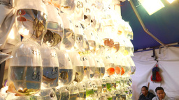 Small alive aquarium fish market stand with plactic Stock Video Footage