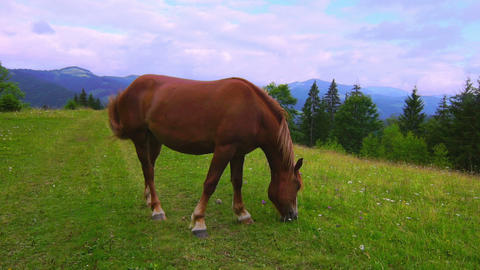Horse Grazing in a Meadow Stock Video Footage