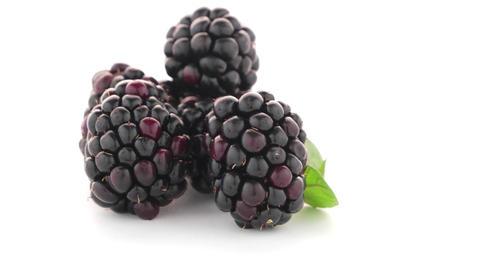 fresh berry blackberry Footage