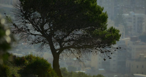 4K, Long Shot On Tree, Cityscape In Background, Sicily, Italy stock footage