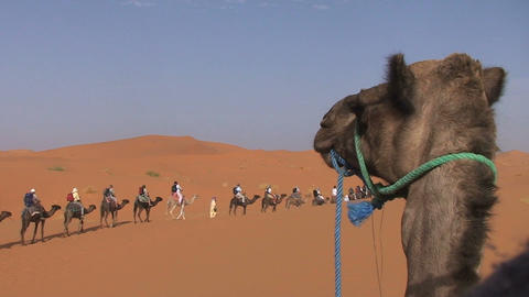 Camel ride in Sahara, Morocco Footage