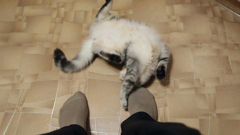 The Cat Plays With The Feet Of The Master stock footage
