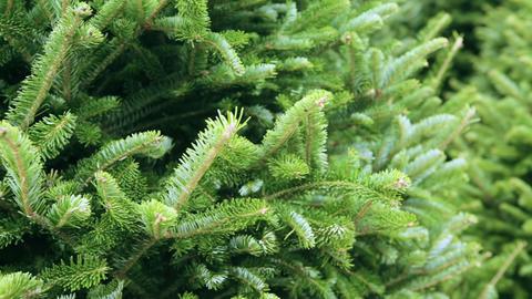 Christmas tree farm Footage