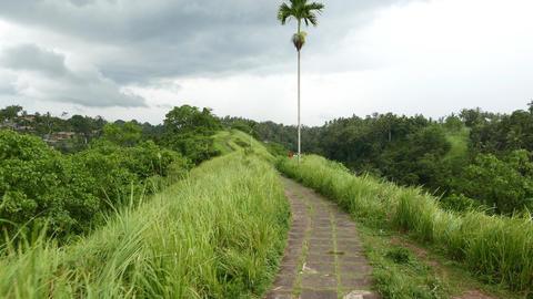 Amazing path run through grassy ridge, single palm tree ahead, tropical nature Footage