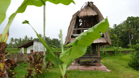 Dilapidated two-level hovel behind exotic plants, slide panning shot Footage