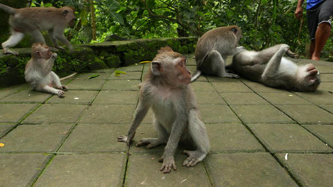 juvenile monkey sit on pavement looking around, within animal group Live Action
