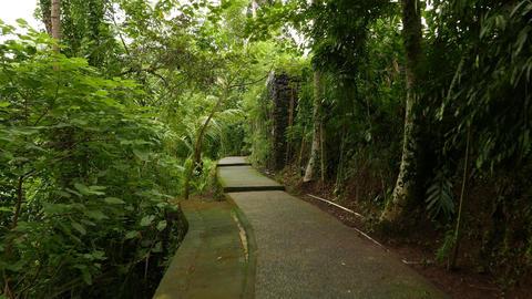 Walk through mossy path at rainforest park, vibrant greenery, glide shot Footage