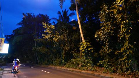 Bats Flitter In Dusk, Rural Road, Animals Messing Fly Under Lantern Light stock footage