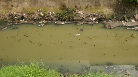 Green muddy flow in dirty stank, excrements floating on surface Live Action
