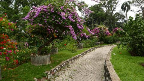 Blossom trees in Hibiscus Garden, Perdana Botanical Garden, Kuala Lumpur Footage