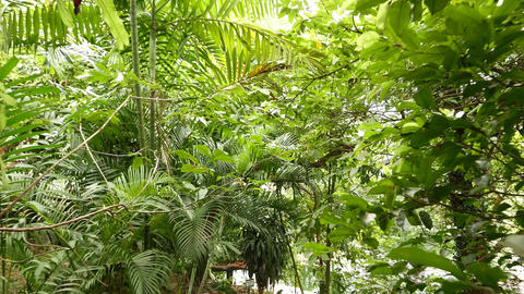 Move through tree leafage and small palm frond, overhead level tropical garden Footage