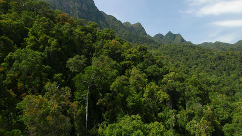 Fly above dense mountainside rainforest, sunny view, waved ridge Footage