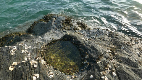 Tide pool, volcanic rocky shore close up, nature created bowl, waves, sea water Footage