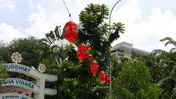 Oblong red paper chinese lanterns hanging over street, against green foliage Live Action
